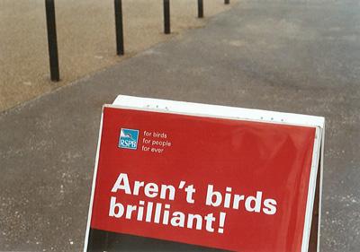 brilliantbirds_web